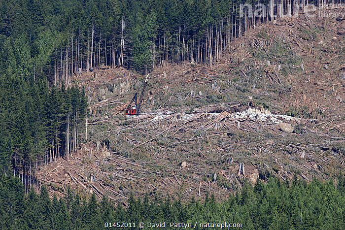 Area of  clearcut coniferous forest. British Columbia, Canada, August 2013, AMERICAS,NORTH AMERICA,CANADA,BRITISH COLUMBIA,AERIAL VIEW,AERIAL SHOTS,AERIALS,BIRDS EYE VIEW,LANDSCAPE,LANDSCAPES,SCENIC,ENVIRONMENT,ENVIRONMENTAL ISSUES,ENVIRONMENTAL ISSUE,ENVIRONMENTAL,ENVIRONMENTAL DAMAGE,DEFORESTATION,NATURAL RESOURCES,FOREST,WOODLAND, David  Pattyn