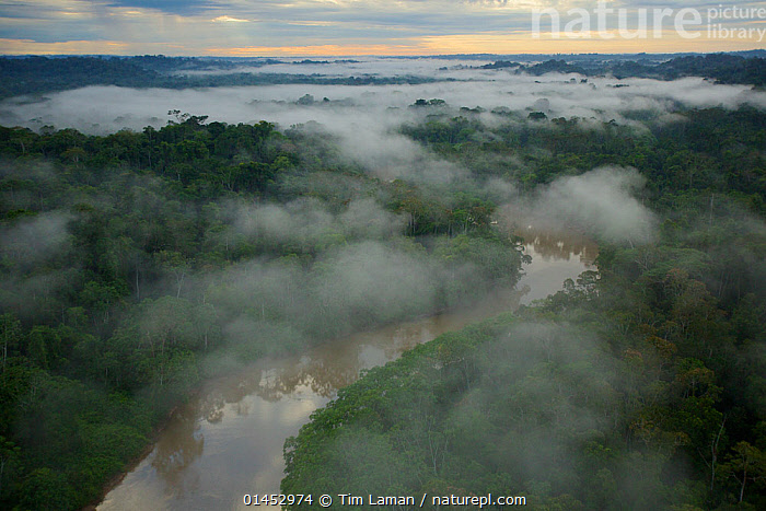 Aerial view of morning mist above the Tiputini River in Yasuni National Park, Francisco de Orellana Province, Ecuador, July.  ,  catalogue6,Atmospheric Mood,Atmospheric,Morning,Mornings,Distant,Distance,No One,Nobody,Latin America,South America,Ecuador,Diminishing Perspective,Aerial View,Birds Eye View,High Angle View,Horizon,Horizon Over Land,Horizons Over Land,Sky,Cloud,Low Cloud,Flowing Water,River,Weather,Meteorology,Mist,Landscape,Landscapes,Outdoors,Open Air,Outside,Day,Woodland,Rainforest,Tropical rainforest,Freshwater,Habitat,Reserve,Forest,Protected area,National Park,Elevated view,South American National Parks,Ecuadorian National Parks,Yasuni National Park,Tiputini River,Francisco de Orellana Province  ,  Tim  Laman