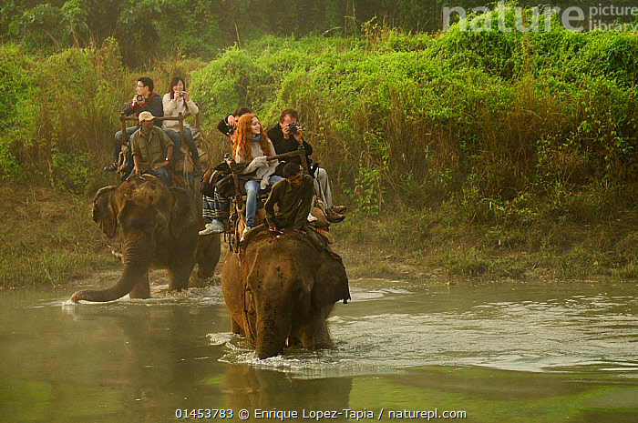 Tourists riding on domestic Indian elephant (Elephas maximus) crossing Narayani River in the dawn mist during wildlife safari, Royal Chitwan National Park, Nepal.  ,  catalogue6,Animal,Vertebrate,Mammal,Elephant,Asian elephants,Asian Elephant,Animalia,Animal,Wildlife,Vertebrate,Chordate,Mammalia,Mammal,Proboscidea,Elephantidae,Elephant,Elephas,Asian elephants,Elephas maximus,Asian Elephant,Indian Elephant,Capturing An Image,Photographing,Crossing,Riding,Wading,Carries,Carry,Working,People,Female,Woman,Male,Man,Recreation Role,Tourist,Tourists,Eco Tourist,Two,Group,Group Of People,Medium Group Of People,Few,Asia,Indian Subcontinent,Nepal,Horizontal,Front View,View From Front,Flowing Water,River,Mist,Travel,Vacations,Tourism,Eco Tourism,Freshwater,Reserve,Domestic animal,Domestic animals,Domesticated,Protected area,National Park,Wildlife watching,Dawn,Two animals,Safari,Carrying on back,Royal Chitwan National Park,Mahout,Narayani River,Working Animal,Endangered species,threatened,Endangered  ,  Enrique Lopez-Tapia