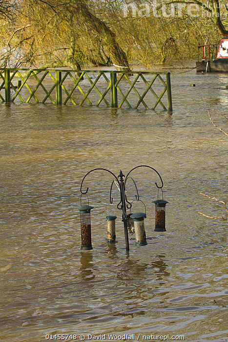 Bird feeders in garden almost submerged during February 2014 floods, Upton upon Severn, Worcestershire, England, UK, 8th February 2014., EUROPE,WESTERN EUROPE,WEST EUROPE,UK,BRITAIN,GREAT BRITAIN,UNITED KINGDOM,ENGLAND,WORCESTERSHIRE,BIRD FEEDERS,GARDENS,FLOODED,FLOODING,FLOODS,FLOODWATER,FLOODWATERS,WATER,WEATHER,ENVIRONMENT,ENVIRONMENTAL ISSUES,ENVIRONMENTAL ISSUE,GLOBAL WARMING,GREENHOUSE EFFECT,FEEDERS,CLIMATE CHANGE, David  Woodfall