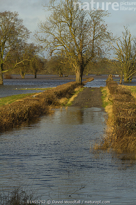 Flooded agricultural fields after February 2014 floods from River Severn, Upton upon Severn, Worcestershire, England, UK, 8th February 2014., EUROPE,WESTERN EUROPE,WEST EUROPE,UK,BRITAIN,GREAT BRITAIN,UNITED KINGDOM,ENGLAND,WORCESTERSHIRE,CULTIVATED LAND,FIELDS,FLOODED,FLOODING,FLOODS,FLOODWATER,FLOODWATERS,WATER,WEATHER,ENVIRONMENT,ENVIRONMENTAL ISSUES,ENVIRONMENTAL ISSUE,GLOBAL WARMING,GREENHOUSE EFFECT,FARMLAND,CLIMATE CHANGE, David  Woodfall