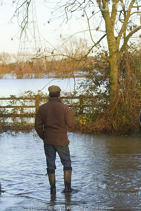 Farm worker in wellington boots and cap stranded by February 2014 floods, Severn  Valley, Gloucestershire, UK, 7th February 2014, PEOPLE,HUMAN,HUMANS,PERSON,PERSONS,MALES,MEN,EUROPE,WESTERN EUROPE,WEST EUROPE,UK,BRITAIN,GREAT BRITAIN,UNITED KINGDOM,ENGLAND,GLOUCESTERSHIRE,REAR VIEW,BACK,FROM BEHIND,FLOODED,FLOODING,FLOODS,FLOODWATER,FLOODWATERS,WATER,WEATHER,ENVIRONMENT,ENVIRONMENTAL ISSUES,ENVIRONMENTAL ISSUE,GLOBAL WARMING,GREENHOUSE EFFECT,CLIMATE CHANGE, David  Woodfall