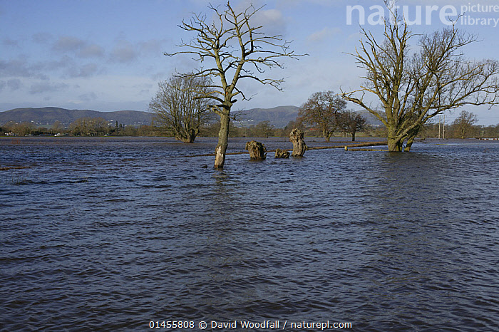 Flooded agricultural fields during February 2014 floods from River Severn, Upton upon Severn, Worcestershire, England, UK, 8th February 2014.  ,  CULTIVATED LAND,FIELDS,FLOODED,FLOODING,FLOODS,FLOODWATER,FLOODWATERS,WATER,WEATHER,ENVIRONMENT,ENVIRONMENTAL ISSUES,ENVIRONMENTAL ISSUE,GLOBAL WARMING,GREENHOUSE EFFECT,FARMLAND,CLIMATE CHANGE,Europe,United Kingdom  ,  David  Woodfall