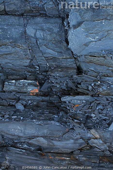 Nature Picture Library - Marcellus shale, source rock of