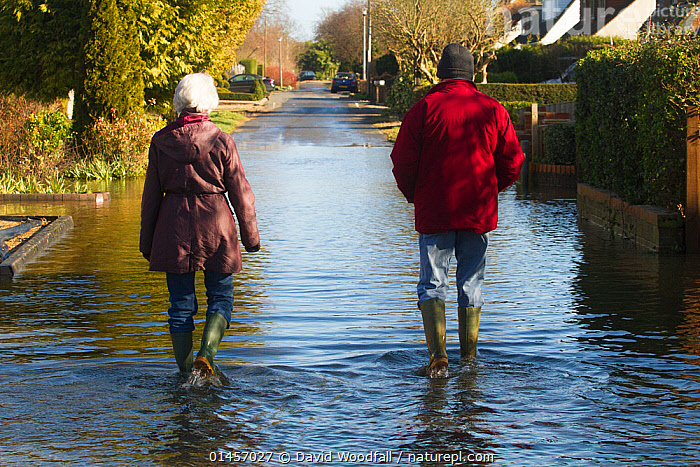 Residents walking through February 2014 floods from River Thames, Wraysbury, Surrey, England, UK, 16th February 2014., catalogue6,Walking,People,Adult,Adults,Mature Adult,Mature Adults,Middle Age,Middle Aged,Middle Age,Middle Aged,Female,Woman,Male,Man,Couple,Adversity,Difficult,Difficulty,2 People,Two Person,Two Persons,Months,February,Europe,Western Europe,UK,Great Britain,England,Surrey,Diminishing Perspective,Full Length,Full Lengths,Whole,Rear View,Back,From Behind,Clothing,Footwear,Boot,Boots,Rubber Boot,Gum Boot,Gum Boots,Rubber Boots,Wellies,Wellington Boot,Wellington Boots,Wellingtons,Welly,Housing Development,Housing Developments,Residential Area,Residential Areas,Residential District,Residential Districts,Neighborhood,Neighborhoods,Neighbourhood,Neighbourhoods,Suburb,Suburban,Suburban Houses,Suburban Housing,Suburbia,Suburbs,Flood,Weather,Winter,Environment,Environmental Issues,Global Warming,Greenhouse Effect,Bad Weather,Severe weather,Climate change,River Thames,United Kingdom, David  Woodfall