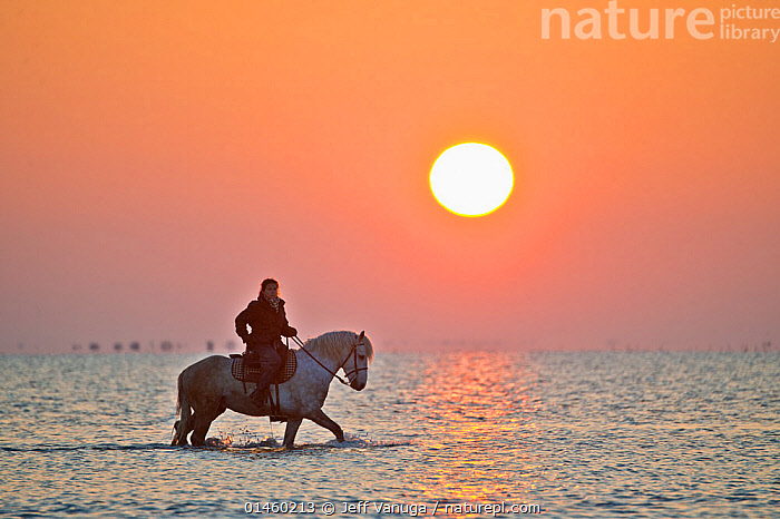 Guardian riding Camargue horse through water at sunrise, Camargue, Bouches du Rhone, France, May 2013., cowboy,wading,gray,coastal waters,high1314,Equus ferus caballus,Equus caballus,Riding,Horseback Riding,People,Female,Woman,Only Women,One Woman Only,One Woman,On The Move,Colour,Grey,Gray,Orange,White,Shallow,1 Person,Single,Single Person,Luminosity,Bright,Brightness,Vivid,Vividness,Glow,Glows,Europe,Western Europe,France,Bouches Du Rhone,Bouches-Du-Rhne,Bouches-Du-Rhone,Copy Space,Profile,Side View,Animal,Riding Tack,Tack,Tacks,Rein,Leading Rein,Leading Reins,Reins,Sunrise,Outdoors,Open Air,Outside,Livestock,Exploration,Coast,Coastal,Domestic animal,Domestic Horse,Cattle,Cows,Camargue cattle,Camargue horse,The Sun,Equus ferus caballus,Equus caballus,Dawn,Horse,Negative space,Moving,White colour,Camargue, Jeff Vanuga