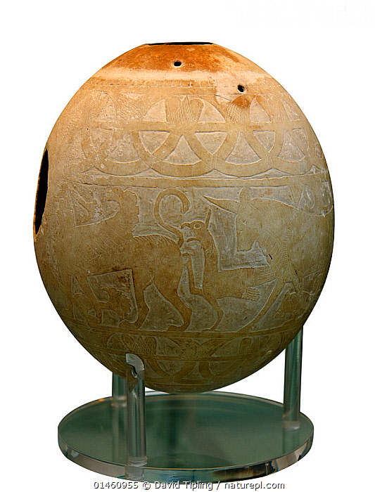 Decorated Ostrich egg dating to around 600 BC. Used as water container. Decorated with 4 sphinxes. Found in Isis tomb, an Etruscan tomb at Vulci, Italy., ANIMAL,VERTEBRATE,BIRDS,ANIMALIA,ANIMAL,WILDLIFE,VERTEBRATE,CHORDATE,AVES,BIRDS,STYLES,ETRUSCAN,EUROPE,SOUTHERN EUROPE,SOUTH EUROPE,ITALY,CUTOUT,PLAIN BACKGROUND,WHITE BACKGROUND,ANIMAL EGGS,EGG,EGGS,ART,CULTURE,ANIMALS IN ART,ANIMALS IN ART,BOOKPLATE,HISTORIC CULTURES,BIRDS AND PEOPLE, David Tipling