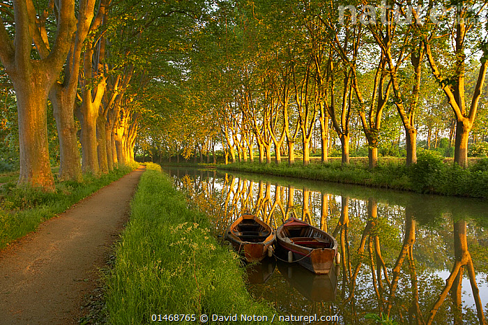 Row boats on the Canal du Midi near Carcassonne, Languedoc, France, May 2005.  ,  MOOD,MOODS,CALM,EUROPE,WESTERN EUROPE,FRANCE,PLANT,TREE,BOAT,BOATS,RECREATIONAL BOAT,PLEASURE BOAT,PLEASURE BOATS,RECREATIONAL BOATS,ROWBOAT,ROWBOATS,ROWING BOAT,ROWING BOATS,SMALL BOAT,SMALL BOATS,REFLECTION,CANAL,CANALS,WATERWAY,WATERWAYS,LANDSCAPE,LANDSCAPES,SPRING,BEAUTY,LOVELY,PRETTINESS,BEAUTIFUL,ATTRACTIVE,PRETTY,OPEN BOAT,OPEN BOAT,OPEN BOATS  ,  David Noton