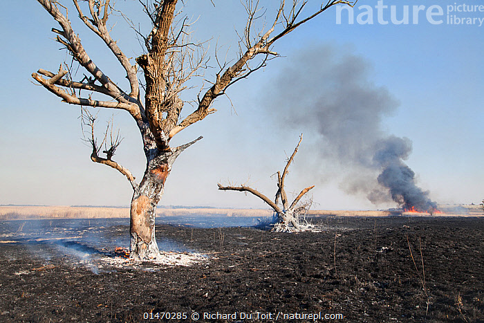 Fire in the distance and scorched ground, Marievale Bird Sanctuary, South Africa, June 2013  ,  DAMAGED,BURNT,AFRICA,SOUTHERN AFRICA,SOUTH AFRICA,PLANT,TREE,FIRE,FIRES,FLAMING,SMOKE,LANDSCAPE,LANDSCAPES,EMERGENCIES AND DISASTERS,DISASTER,DISASTERS,ENVIRONMENT,ENVIRONMENTAL ISSUES,ENVIRONMENTAL DAMAGE,CONSERVATION ISSUES,PROTECTED AREA,RESERVE,ENVIRONMENTAL CONCERN,SOUTHERN AFRICAN,WILDFIRE,RAMSAR SITE,SOUTH AFRICAN,WILD FIRE,WILD FIRES  ,  Richard Du Toit