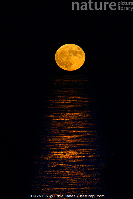 RF- Full moon rising over the north sea, Sherringham, Norfolk, England, UK, December. (This image may be licensed either as rights managed or royalty free.)  ,  Atmospheric Mood,Colour,Yellow,Nobody,Dark,Luminosity,Shape,Circle,Halloween,Europe,Western Europe,UK,Great Britain,England,Norfolk,Reflection,Moon,Full Moon,Outdoors,Winter,Night,Marine,Water Surface,Water,Saltwater,Sea,North Sea,View to sea,RF,Royalty free,RFCAT1,RF17Q1,Sheringham,  ,  Ernie  Janes