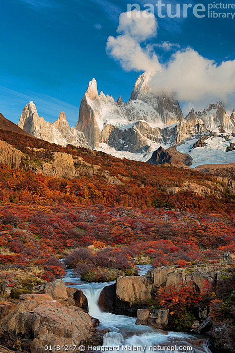 Waterfall and autumn foliage with view to Mount Fitz Roy. El Chalten, Patagonia, Argentina. April 2013., catalogue7,Eroding,Colour,Brown,Nobody,Jagged,Craggy,Snowcapped,Latin America,South America,Argentina,Patagonia,Vertical,Photographic Effect,Long Exposure,Plant,Leaf,Foliage,Tree,Mountain,Rock Formations,Sky,Cloud,Flowing Water,Waterfall,Cascade,Cascades,Waterfalls,Stream,Streams,Landscape,Landscapes,Outdoors,Open Air,Outside,Autumn,Autumnal,Fall,Day,Freshwater,Water,Geology,Blue sky,Extreme Terrain,Brown Colour,Mount Fitz Roy,El Chalten, Hougaard Malan