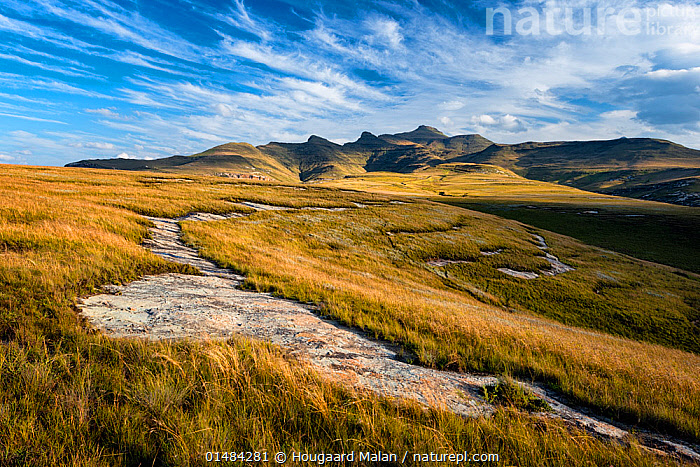 Hills of the Maluti Drakensberg. Golden Gate National Park, Free State, South Africa. April 2013., AFRICA,SOUTHERN AFRICA,SOUTH AFRICA,MOUNTAIN,LANDSCAPE,LANDSCAPES,GRASSLAND,RESERVE,PROTECTED AREA,NATIONAL PARK,SOUTHERN AFRICAN,SOUTH AFRICAN,FREE STATE, Hougaard Malan