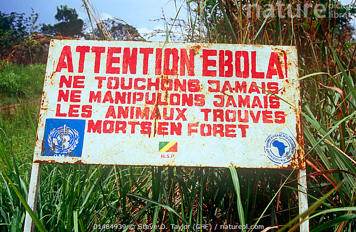 Warning notice for Ebola during the 2008 pandemic, northern Republic of the Congo (Congo-Brazzaville), 2008., EBOLA VIRUS,AFRICA,CENTRAL AFRICA,REPUBLIC OF THE CONGO,MICRO ORGANISM,MICRO ORGANISMS,VIRUS,VIRUSES,INFORMATION,SIGNAGE,SIGNS,INFORMATION SIGNS,PROHIBITION SIGN,PROHIBITION SIGNS,WARNING,WARNING SIGNS,WARNINGS,DISEASE,PATHOGENIC,MONONEGAVIRALES,FILOVIRIDAE,EBOLAVIRUS,EBOLA VIRUS,EBOV,EBOLA VIRUS DISEASE,EBOLA HEMORRHAGIC FEVER,EHF,EVD,DISEASE, Steve O. Taylor (GHF)