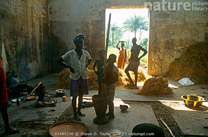 Rice farmers pounding freshly harvested rice, Port Loko district, Sierra Leone, 2004-2005., high15,,,Standing,People,African Descent,Native African Ethnicity,Woman,Family,Agricultural Occupation,Farmer,Preparation,Group,Group Of People,Small Group Of People,Few,5 People,Africa,West Africa,Sierra Leone,Interior,Food,Grain,Grains,Rice,Equipment,Utensil,Cooking Utensil,Pestle And Mortar,Mortar And Pestle,Mortar And Pestles,Mortars And Pestles,Pestle And Mortars,Pestles And Mortars,Building,Entrance,Doorway,Home Interior,Domestic Room,Indoors,Local people,West African,Local Industry,Port Loko,Self-Sufficient,, Steve O. Taylor (GHF)