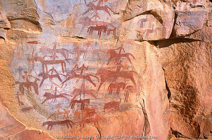 Battle mural cave painting showing human and animal figures, Guilemsi, central Mauritania, 2004.  ,  ANCIENT,AFRICA,WEST AFRICA,MAURITANIA,ART,MURALS,WALL PAINTING,WALL PAINTINGS,DESERT,DESERTS,ROCK,HISTORY,CULTURE,AFRICAN CULTURE,AFRICAN,ANIMALS IN ART,ANIMALS IN ART,ROCK ART,WEST AFRICAN,THE PAST,NATIVE AFRICAN CULTURE  ,  Steve O. Taylor (GHF)