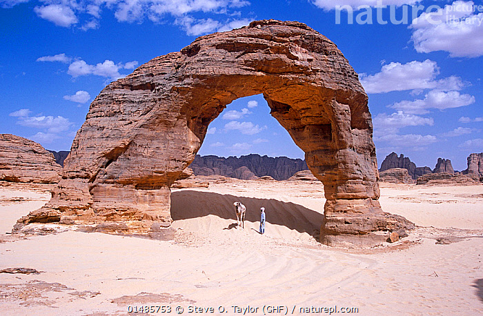 Rock arch in the far north of Niger, 2005., high15,,,Standing,People,Man,Scale,Proportion,Below,Beneath,Under,Underneath,Famous Place,Landmark,1 Person,Single,Single Person,Dry,Arid,Size,Large,Big,Africa,West Africa,Niger,Animal,Rock Formations,Arch,Arches,Desert,Deserts,Rock,Sky,Cloud,Sands,Landscape,Landscapes,Outdoors,Open Air,Outside,Day,Domestic animal,Geology,West African,Insignificant,Domestic camel,Camel,Mammal,, Steve O. Taylor (GHF)
