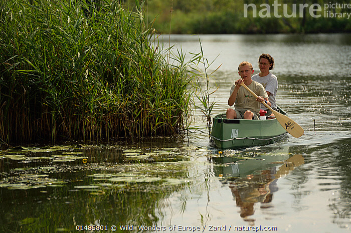 Tourists canoeing on the Peene river, Anklam, Germany, August 2014., PADDLING,LEISURE,PEOPLE,CHILD,FEMALE,WOMAN,MALE,RECREATION ROLE,TOURIST,TOURISTS,EUROPE,WESTERN EUROPE,GERMANY,PLANT,GRASS FAMILY,REED,REEDS,BOAT,BOATS,OAR,OARS,PADDLE,PADDLES,REFLECTION,FLOWING WATER,RIVER,LANDSCAPE,LANDSCAPES,SPORT,SPORTS,WATER SPORT,WATER SPORTS,CANOEING,CANOEIST,CANOEISTS,FRESHWATER,WATER,BOAT PART,WILD WONDERS OF EUROPE,WWE,REWILDING,SOLVIN ZANKL ,Oder Delta, ,Oder Delta,, Wild  Wonders of Europe / Zankl