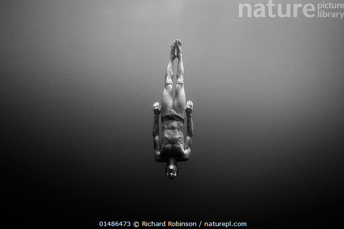 William Trubridge diving -  a world champion free diver who is campaigning to protect the Critically Endangered Maui's dolphin (Cephalorhynchus hectori maui) endemic to New Zealand. January 2008.  Editorial use only  ,  catalogue7,Diving,Swimming,People,Male,Man,Direction,Energetic,Skill,Upside Down,Inverted,Upturned,1 Person,Single,Single Person,Campaign,Campaigning,Australasia,New Zealand,Full Length,Full Lengths,Whole,Black And White,B/W,Monochromatic,Marine,Underwater,Water,Abstract,Abstracts,Saltwater,Sea,Biodiversity hotspot,Direct action,Purpose,Greyscale,Diver,Free Diver,Champion,,Skill, Efficiency,  ,  Richard Robinson
