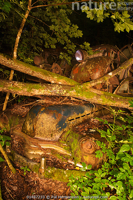 Old rusting car under fallen trees at night. Bastnas car graveyard, Sweden, July.  ,  ABANDONED,BRANCH,BRANCHES,CAR,CARS,DECAYING,DECOMPOSITION,ENVIRONMENT,ENVIRONMENTAL ISSUES,EUROPE,FALLEN TREE,FORGOTTEN,GTALAND,JUNKYARD,LAND VEHICLE,MOTOR VEHICLE,Nature Reclamation,NATURE TAKING OVER,NIGHT,NORDIC COUNTRIES,NORTH EUROPE,NORTHERN EUROPE,OLD,OVERGROWN,PLANT,RUST,RUSTED,RUSTING,RUSTY,SCANDINAVIA,SWEDEN,TREE,Varmland,VERTICAL,VRMLAND  ,  Pal Hermansen