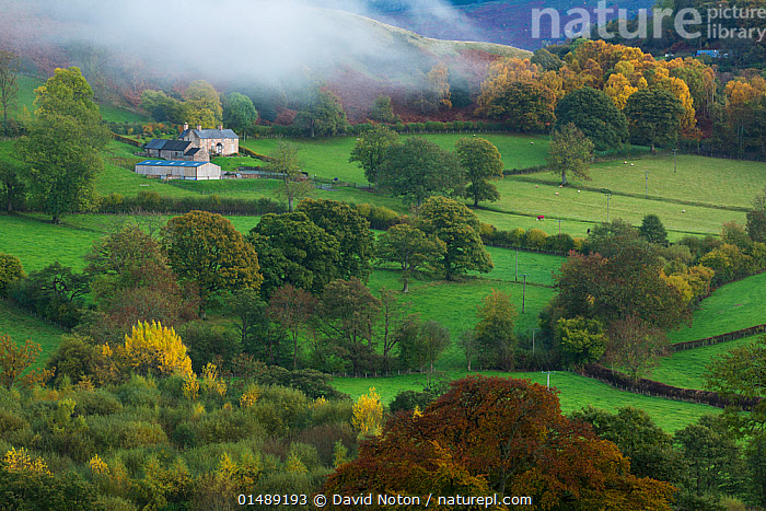 Autumn mist in Dee Valley (Dyffryn Dyfrdwy) near Llangollen, Denbighshire, Wales, UK, November 2013.  ,  MORNING,MORNINGS,EUROPE,WESTERN EUROPE,UK,GREAT BRITAIN,ENGLAND,WALES,HIGH ANGLE VIEW,PLANT,TREE,FARMS,BUILDING,RESIDENTIAL STRUCTURE,HOUSE,HOUSES,FARMHOUSE,FARMHOUSES,CULTIVATED LAND,FIELDS,VALLEY,VALLEYS,MIST,COUNTRYSIDE,LANDSCAPE,LANDSCAPES,AUTUMN,AUTUMNAL,FALL,AGRICULTURE,WOODLAND,FOREST,FARMLAND,DENBIGHSHIRE,SIR DDINBYCH,SUS SCROFA DOMESTICA,DAWN,ELEVATED VIEW,United Kingdom  ,  David Noton