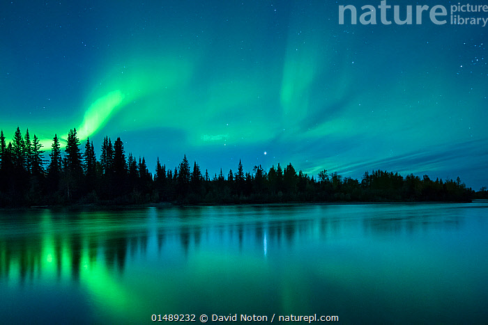 Aurora Borealis (Northern Lights) over the Klondike River, Yukon Territories, Canada, September 2013.  ,  high15,,,Astonishing,Spectacular,Ethereal,Mood,Calm,Colour,Green,Nobody,Dark,Darkness,Wispy,North America,Canada,Yukon,Back Lit,Backlit,Plant,Tree,Skyline,Skylines,Light,Lights,Reflection,Stars,Sky,Flowing Water,River,Aurora,Auroras,Aurora Borealis,Northern Lights,Landscape,Landscapes,Outdoors,Open Air,Outside,Twilight,Evening,Night,Beautiful,Woodland,Freshwater,Water,Forest,Silhouette,Phenomenon,Wilderness,Dramatic,Green colour,Mystic,Divine,,,Divine,,,Beauty in nature,,,beauty in nature,  ,  David Noton