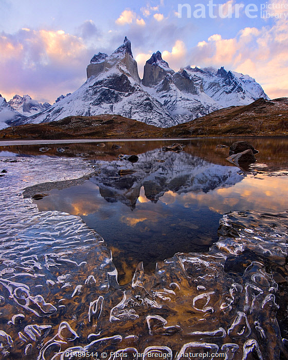 Cuernos del Paine reflected in icy lake at dawn, Torres del Paine National Park, Chile, June 2014., catalogue7,Atmospheric Mood,Atmospheric,Frozen,Nobody,Jagged,Craggy,Snowcapped,Temperature,Cold,Latin America,South America,Chile,Vertical,Mountain,Reflection,Sky,Cloud,Ice,Landscape,Landscapes,Outdoors,Open Air,Outside,Day,Nature,Natural,Natural World,Freshwater,Lake,Water,Reserve,Geology,Protected area,National Park,Dawn,South American National Parks,Chilean National Parks,Torres del Paine National Park,Los Cuernos,Cuernos del Paine, Floris  van Breugel