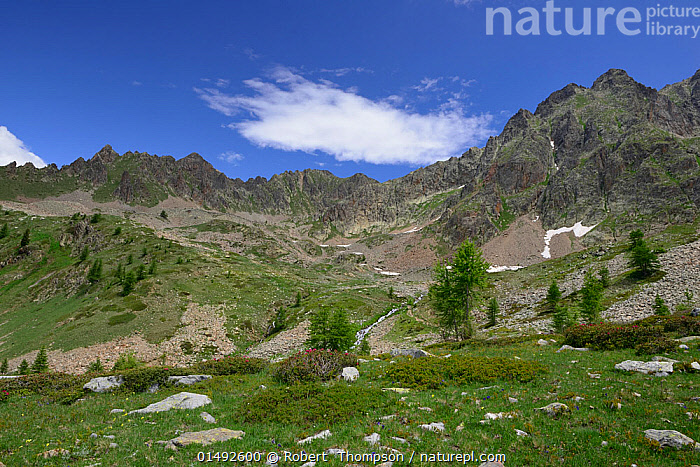 Landscape of Vallee de Rio Freddo, Maritime Alps, Italy, July 2014., EUROPE,SOUTHERN EUROPE,SOUTH EUROPE,ITALY,MOUNTAIN,VALLEY,VALLEYS,COUNTRYSIDE,LANDSCAPE,LANDSCAPES,NATURE,NATURAL,NATURAL WORLD,SCENICS,OPEN SPACE,OPEN SPACES,SCENERY,VIEW,VIEWS,VISTA,ALPS,ALPES, Robert  Thompson