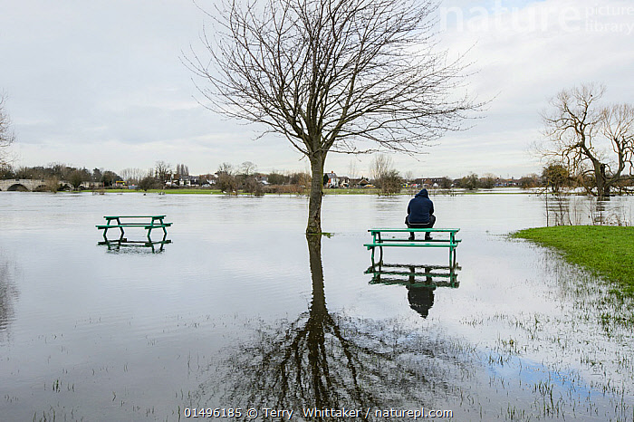 Man sat on picnic bench in park flooded by River Thames, Chertsey, Surrey, UK, February 2014.  ,  high15,,,Sitting,Thinking,Thoughtful,Waiting,People,Man,Sadness,Alone,Despair,Solitude,Solitary,The End,1 Person,Single,Single Person,Europe,Western Europe,UK,Great Britain,England,Surrey,Plant,Tree,Bare Tree,Bare Trees,Furnishing,Furniture,Benches,Table,Tables,Picnic Table,Picnic Tables,Park,Parks,Reflection,Flood,Weather,Landscape,Landscapes,Outdoors,Open Air,Outside,Winter,Day,Environment,Environmental Issues,Global Warming,Greenhouse Effect,Climate change,Contemplation,Despondent,Downcast,River Thames,Chertsey,  ,  Terry  Whittaker