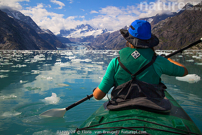 Kayaker paddles between ice, Johns Hopkins Inle, Glacier Bay National Park, Alaska, Model released  ,  catalogue7,American,Sitting,People,Female,Woman,Adventure,Adventures,Adventurous,Independence,Independent,Journey,On The Move,Sayings,Getting Away From It All,Away From It All,Silence,Quiet,Colour,Blue,Green,1 Person,Single,Single Person,Snowcapped,Temperature,Cold,North America,USA,Western USA,Alaska,Rear View,Clothing,Hat,Hats,Boat,Boats,Kayak,Kayaks,Mountain,Bay,Bays,Inlets,Ice,Iceberg,Icebergs,Exploration,Sport,Sports,Water Sport,Water Sports,Kayaking,Kayaker,Kayakers,Coast,Marine,Water Surface,Coastal,Water,Reserve,Open boat,Saltwater,Protected area,National Park,View to land,Discovery,Moving,Green colour,Sea ice,American,Blue Colour  ,  Floris  van Breugel
