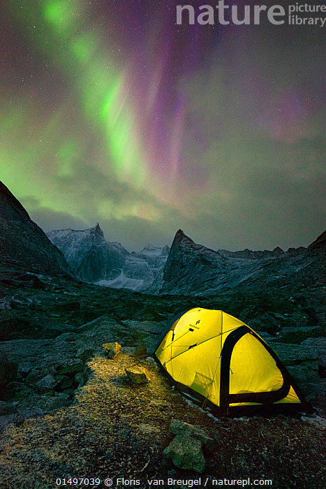 Aurora Borealis over yellow tent lit from within and mountainous scenery, Arrigetch Peaks, Gates of the Arctic National Park, Brooks Range, Alaska, USA, August 2014.  ,  catalogue7,American,Adventure,Adventures,Adventurous,Magic,Magical,Majestic,Alone,Sayings,Getting Away From It All,Away From It All,Solitude,Solitary,Colour,Green,Purple,Yellow,Nobody,Vibrant Colour,Jagged,Craggy,Luminosity,Glow,Glows,Illuminating,Illumination,Illuminations,Iluminated,North America,USA,Western USA,Alaska,Vertical,Tent,Mountain,Summit,Light,Lights,Sky,Aurora,Auroras,Aurora Borealis,Northern Lights,Landscape,Landscapes,Outdoors,Open Air,Outside,Night,Beautiful,Pretty,Exploration,Nature,Natural,Natural World,Beauty In Nature,Reserve,Phenomenon,Protected area,National Park,Discovery,Green colour,Lit Up,Brooks Range,Extreme Camping,American,Yellow Colour,Arrigetch Peaks,Wonder,Spectacular,  ,  Floris  van Breugel