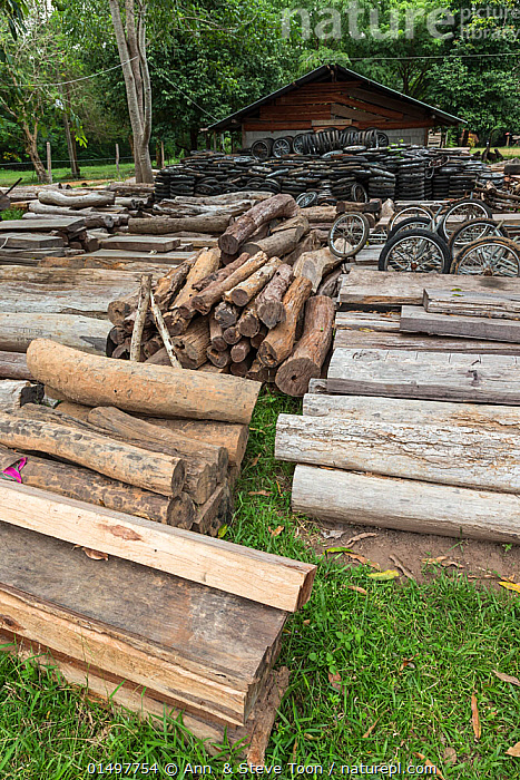 Siam rosewood tree (Dalbergia cochinchinensis) timber and motorcycle wheels, confiscated from poachers, stored as evidence, Thap Lan National Park, Dong Phayayen-Khao Yai Forest Complex, eastern Thailand, August., PLANT,VASCULAR PLANT,FLOWERING PLANT,ROSID,LEGUME,INDIAN ROSEWOOD,SIAMESE ROSEWOOD,PLANTAE,PLANT,TRACHEOPHYTA,VASCULAR PLANT,MAGNOLIOPSIDA,FLOWERING PLANT,ANGIOSPERM,SEED PLANT,SPERMATOPHYTE,SPERMATOPHYTINA,ANGIOSPERMAE,FABALES,ROSID,DICOT,DICOTYLEDON,ROSANAE,FABACEAE,LEGUME,PEA,BEAN,LEGUMINOSAE,DALBERGIA,INDIAN ROSEWOOD,ILLEGAL,ASIA,SOUTH EAST ASIA,THAILAND,VERTICAL,LOG,LOGS,PART OF VEHICLE,WHEEL,WHEELS,WOOD,WOODEN,TIMBER,BOARD,BOARDS,PLANKS,ENVIRONMENT,ENVIRONMENTAL ISSUES,ENVIRONMENTAL DAMAGE,NATURAL RESOURCES,FOREST,CONSERVATION,POACHING,WILDLIFE CONSERVATION,CONSERVATION ISSUES,PROTECTED AREA,UNESCO WORLD HERITAGE SITE,UNESCO,HERITAGE SITE,WORLD HERITAGE SITE,WILDLIFE CRIME,CONFISCATED,STORING,STORAGE,DALBERGIA COCHINCHINENSIS,SIAMESE ROSEWOOD,THAILAND ROSEWOOD,SIAM ROSEWOOD,THAI ROSEWOOD,TRACWOOD, Ann  & Steve Toon