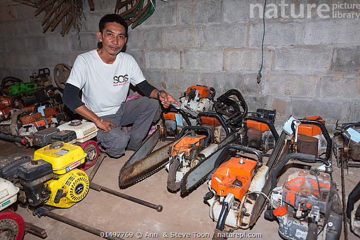 Sayan Raksachart of Freeland Foundation, with confiscated outboard motors and chainsaws used by Siam rosewood tree poachers, Thap Lan National Park, Dong Phayayen-Khao Yai Forest Complex, eastern Thailand, August, 2014., PLANT,VASCULAR PLANT,FLOWERING PLANT,ROSID,LEGUME,INDIAN ROSEWOOD,SIAMESE ROSEWOOD,PLANTAE,PLANT,TRACHEOPHYTA,VASCULAR PLANT,MAGNOLIOPSIDA,FLOWERING PLANT,ANGIOSPERM,SEED PLANT,SPERMATOPHYTE,SPERMATOPHYTINA,ANGIOSPERMAE,FABALES,ROSID,DICOT,DICOTYLEDON,ROSANAE,FABACEAE,LEGUME,PEA,BEAN,LEGUMINOSAE,DALBERGIA,INDIAN ROSEWOOD,PEOPLE,ILLEGAL,ASIA,SOUTH EAST ASIA,THAILAND,LOG,LOGS,EQUIPMENT,WORK TOOL,TOOL,TOOLS,WORK TOOLS,SAW,SAWS,CHAIN SAW,CHAIN SAWS,WOOD,WOODEN,TIMBER,ENVIRONMENT,ENVIRONMENTAL ISSUES,ENVIRONMENTAL DAMAGE,NATURAL RESOURCES,CONSERVATION,POACHING,WILDLIFE CONSERVATION,CONSERVATION ISSUES,PROTECTED AREA,UNESCO WORLD HERITAGE SITE,UNESCO,HERITAGE SITE,WORLD HERITAGE SITE,WILDLIFE CRIME,CHAINSAW,DALBERGIA COCHINCHINENSIS,SIAMESE ROSEWOOD,THAILAND ROSEWOOD,SIAM ROSEWOOD,THAI ROSEWOOD,TRACWOOD, Ann  & Steve Toon