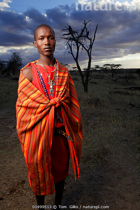Maasai man, Mara region, Kenya, September 2013.  ,  PEOPLE,AFRICAN DESCENT,NATIVE AFRICAN ETHNICITY,MASAI,MASAIS,MALE,MAN,AFRICA,EAST AFRICA,KENYA,VERTICAL,WIDE ANGLE,CLOTHING,TRADITIONAL CLOTHING,LANDSCAPE,LANDSCAPES,OUTDOORS,OPEN AIR,OUTSIDE,CULTURE,INDIGENOUS CULTURE,TRIBES,MASAAI  ,  Tom  Gilks