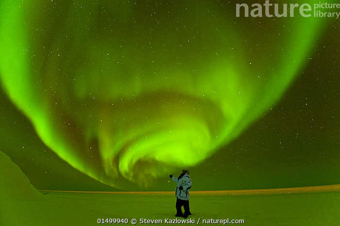 Photographer in front of Northern lights / Aurora borealis glowing brightly over the frozen eastern Beaufort Sea, Arctic National Wildlife Refuge, Alaska Model released.  ,  high15,,American,Standing,People,Man,Only Men,One Man,Traveller,Admiration,Admire,Admires,Admiring,Appreciation,Astonishing,Spectacular,Ethereal,Majestic,Alone,Scale,Proportion,Solitude,Solitary,Colour,Green,Above,1 Person,Single,Single Person,Luminosity,Bright,Brightness,Vivid,Vividness,Glow,Glows,Size,Large,Big,Shape,Shapes,Swirl,Swirling,Swirls,North America,USA,Western USA,Alaska,Arctic,Polar,Sky,Ocean,Arctic Ocean,Landscape,Landscapes,Outdoors,Open Air,Outside,Night,Day,Nature,Natural,Natural World,Beauty In Nature,Marine,Water,Saltwater,Phenomenon,Insignificant,Green colour,Expansive,Arctic National Wildlife Refuge,Beaufort Sea,American,Journeyman,Mystic,United States of America,  ,  Steven Kazlowski