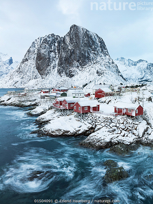 Rorbu houses in front of Festhelltinden mountain, Hamnoy, Moskenes, Lofoten, Norway, December., high15,,,Community,Communities,Nobody,Temperature,Cold,Europe,Northern Europe,North Europe,Nordic Countries,Scandinavia,Norway,Settlement,Town,Towns,Village,Villages,Building,Residential Structure,House,Houses,Mountain,Tide,Tides,Snow,Landscape,Landscapes,Outdoors,Open Air,Outside,Day,Coast,Marine,Coastal,Water,Saltwater,Sea,View to land,Tidal,Fishing Village,Moskenes,Lofoten,Nordland,Rorbu,Festhelltinden (Hamnoy,Moskenes,Lofoten,Norway),, Erlend Haarberg