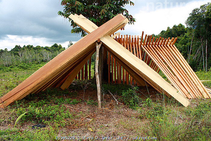 Timber for sale outside Singkawang, West Kalimantan, Indonesia Borneo. June 2010.  ,  Asia,South East Asia,Plant,Tree,Timber,Board,Boards,Planks,Environment,Environmental Issues,Environmental Damage,Deforestation,Natural Resources,Borneo island,Borneo,Kalimantan  ,  Steve O. Taylor (GHF)