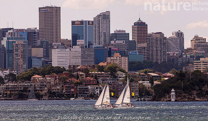 Two yachts racing in the Sydney Harbor in Sydney, New South Wales, Australia, November 2012. All non-editorial uses must be cleared individually., Leisure,Australasia,Australia,New South Wales,Sydney,City,Skyline,Skylines,Boat,Boats,Sailboat,Sail Boat,Sail Boats,Sailboats,Sailing Boat,Sailing Boats,Cityscape,Sport,Sports,Water Sport,Water Sports,Sailing,Boating,Yachting,Yacht, Onne  van der Wal