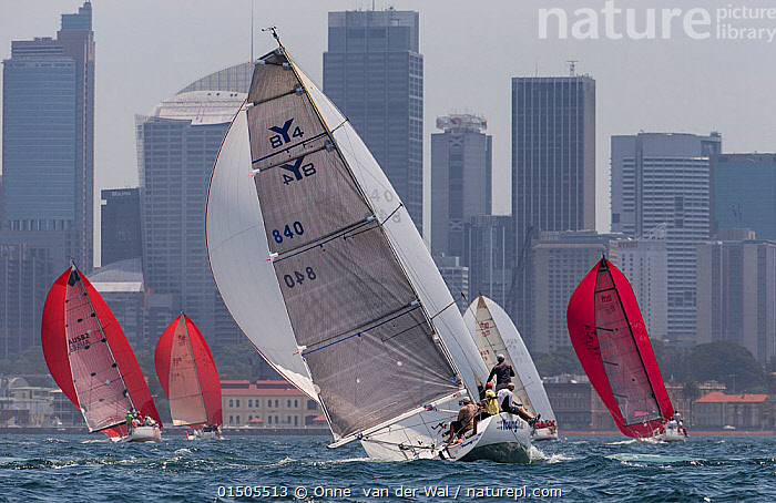 Sailboats with spinnakers out, racing in the Sydney Harbour, New South Wales, Australia, October 2012. All non-editorial uses must be cleared individually., Leisure,Competition,Few,Four,Group,Australasia,Australia,New South Wales,Sydney,City,Skyline,Skylines,Building,Skyscraper,Skyscrapers,Boat,Boats,Sailboat,Sail Boat,Sail Boats,Sailboats,Sailing Boat,Sailing Boats,Sail,Cityscape,Sport,Sports,Racing,Water Sport,Water Sports,Sailing,Boating,Yachting,Travel,Place Of Interest,Travel Destinations,Coast,Coastal,Yacht,Boat Part,Spinnaker,Boat race, Onne  van der Wal