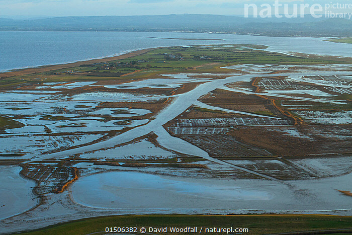 Aerial view of Steart Marshes Wildfowl and Wetland Trust Nature Reserve, agricultural land transformed into wetland reserve, Somerset, UK, February 2015.   This area has been allowed to flood by the WWT and the Environment Agency to create new salt marsh habitat and is an example of managed retreat., Flood management,Managed retreat,Climate change,,Environment Agency,,,Salt marshes,Europe,Western Europe,UK,Great Britain,England,Somerset,Aerial View,High Angle View,Peninsula,Promontory,Flood,Landscape,Landscapes,Environment,Environmental Issues,Global Warming,Greenhouse Effect,Nature,Natural,Natural World,Nature Reserve,Coast,Wetland,Marsh,Marshland,Coastal Wetland,Coastal,Reserve,Conservation,Sea defences,Sea defence,Climate change,Protected area,Saltmarsh,Salt marshes,Elevated view,National Reserve,From the air,Sea level rise,,Somerset levels, Habitat creation, Conservation,Reserve,WWT,Wildfowl and Wetlands Trust, Environment Agency, EA,Deliberate flooding,Flood management,, David  Woodfall