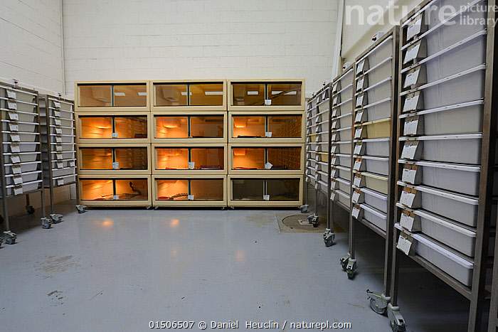Nature Picture Library - Snake vivariums at Venomworld, breeders of