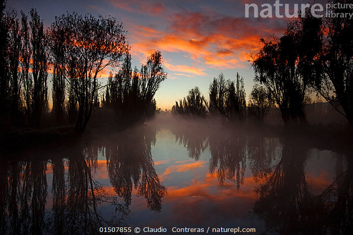 Canal between chinampas, a wetland agricultural system, at dawn, Xochimilco wetlands, Mexico City, November  ,  high15,,,Atmospheric Mood,Atmospheric,The Way Forward,Way Forward,Mood,Calm,Mystery,Mysterious,Colour,Pink,Nobody,Latin America,Central America,Mexico,Mexico City,Diminishing Perspective,Back Lit,Backlit,Treelined,Line Of Trees,Tree-Lined,Infrastructure,Water Management Infrastructure,Water Supply Structure,Irrigation,Irrigation Structures,Irrigation Systems,Reflection,Sky,Cloud,Canal,Canals,Waterway,Waterways,Outdoors,Open Air,Outside,Night,Agriculture,Freshwater,Wetland,Water,Silhouette,Dawn,Dreamscape,Xochimilco,  ,  Claudio  Contreras