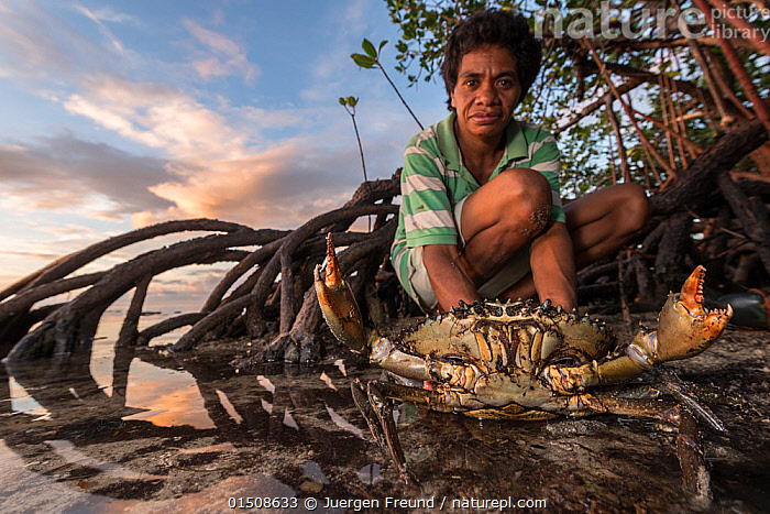 Fijian expert crab hunter with aggressive Mudcrab (Scylla serrata) in mangroves, Mali Island, Macuata Province, Fiji, South Pacific., Animal,Crustacean,Decapod,Swimming crab,Giant Mud Crab,Animalia,Animal,Wildlife,Crustracea,Crustacean,Malacostraca,Decapoda,Decapod,Portunidae,Swimming crab,Scylla,Scylla serrata,Giant Mud Crab,Mudcrab,Achelous crassimanus,Cancer serrata,Lupa lobifrons,People,female,woman,Oceania,Melanesia,Fiji,Republic of Fiji,Portrait,Plant,Tree,Mangrove Tree,Mangrove,Mangrove Trees,Mangroves,Coast,Coastal Wetland,Coastal,Animal Behaviour,Aggression,Arthropod,Arthropods,Behaviour,Dusk,Invertebrate,Marine, Jurgen Freund