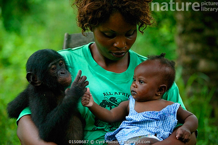 Surrogate mother holding orphan Bonobo (Pan paniscus) and her own baby Lola ya Bonobo Sanctuary, Democratic Republic of the Congo., high15,,Animal,Vertebrate,Mammal,Ape,Bonobo,Animalia,Animal,Wildlife,Vertebrate,Mammalia,Mammal,Primate,Primates,Hominidae,Ape,Greater apes,Hominoidea,Pan,Pan paniscus,Bonobo,Sitting,Touching,Touch,People,African Descent,West African Descent,Child,Human Baby,Babies,Infancy,Infant,Infants,Woman,Family,Parent,Mother,Curiosity,Friendship,Africa,Central Africa,Democratic Republic of the Congo,Waist Up,Half Length,Young Animal,Juvenile,Outdoors,Open Air,Outside,Day,Adoption,Adoptions,Conservation,Animal rehabilitation,Volunteer,Volunteering,Volunteers,Rehabilitation,Unlikely friends,Unusual friends,Wildlife conservation,Protected area,Animal orphan,Orphan,Sanctuary,DRC,Lola Ya Bonobo Sanctuary,Surrogate,Endangered species,threatened,Endangered,,Great apes,, Cyril Ruoso
