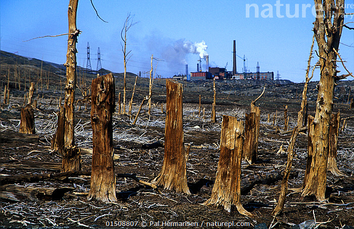 Dead, polluted Larch (Larix) forest, with power station behind, Norilsk, Russia., high15,,Plant,Vascular plant,Conifer,Larch tree,Plantae,Plant,Tracheophyta,Vascular plant,Pinopsida,Conifer,Gymnosperm,Spermatophyte,Pinophyta,Coniferophyta,Coniferae,Spermatophytina,Gymnospermae,Pinales,Pinaceae,Larix,Larch tree,Larch,Destruction,Dead,Nobody,Smog,Russia,Tree Stump,Tree,Building,Industrial Building,Industrial Facility,Factory,Infrastructure,Energy Infrastructure,Energy Infrastructures,Power Plant,Fossil Fuel,Fossil Fuels,Fuel,Fuels,Smoke,Outdoors,Open Air,Outside,Day,Environment,Environmental Issues,Environmental Damage,Power supply,Forest,Death,Energy,Man-made disaster,Norilsk,Krasnoyarsk Krai,Tree,Trees, Pal Hermansen
