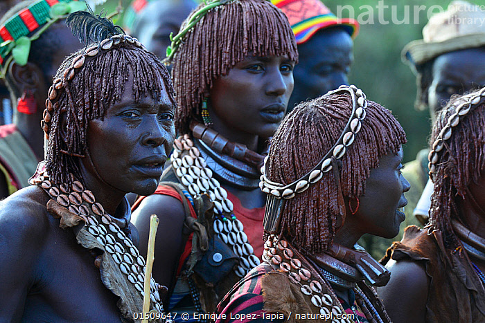 Hamer women in traditional clothing at the Jumping of the bulls ceremony. Ethiopia, November 2014, high15,,,Standing,People,African Descent,East African Descent,Ethiopian Ethnicity,Native African Ethnicity,Woman,Rite Of Passage,Rites Of Passage,Growing Up,Togetherness,Close,Together,Ornate,Decorative,Ornamental,Group,Group Of People,Medium Group Of People,Africa,East Africa,Ethiopia,Animal,Shell,Seashell,Clothing,Traditional Clothing,Jewelry,Jewellery,Jewellry,Outdoors,Open Air,Outside,Day,Culture,African Culture,African,Indigenous Culture,Tribes,Native African culture,Initation,Entering Manhood,Coming of age,Hamer,headband,Jumping of The Bulls,, Enrique Lopez-Tapia