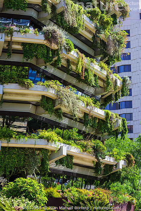 Vertical garden on the walls of a tower block, Barcelona. Catalonia. Spain, June 2013., high15,,,Nobody,Europe,Southern Europe,Iberian Peninsula,Spain,Catalonia,Barcelona,Vertical,Close Up,Plant,Building,Building Exterior,Residential Structure,Multiple Dwelling,Multiple Dwellings,Apartment Houses,Balcony,Balconies,Wall,Facade,Facades,Front,Outdoors,Open Air,Outside,Day,Vertical garden,Towerblock,Block of Flats,, Juan Manuel Borrero