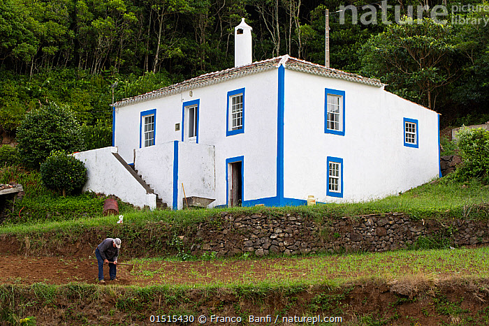 Man working in front of his house at Santa Barbara, Santa Maria Island, Azores, Portugal, Atlantic Ocean.  ,  Working,People,Male,Man,Equipment,Gardening Equipment,Gardening Tools,Tool,Tools,Hoe,Hoeing,Hoes,Building,Residential Structure,House,Houses,Atlantic Islands,Azores,Horticulture,Gardening  ,  Franco  Banfi