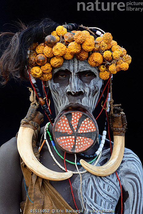 Portrait of woman from the Mursi tribe, traditionally decorated and painted, wearing a large clay lip plate, Omo Valley, Ethiopia, March 2015.  ,  high15,,,People,African Descent,Native African Ethnicity,Woman,Only Women,One Woman Only,One Woman,Bizarre,Weird,Traditional,Colour,Yellow,1 Person,Single,Single Person,Africa,East Africa,Ethiopia,Plain Background,Black Background,Front View,View From Front,Portrait,Animal,Tusk,Tusks,Decoration,Body Paint,Face Painting,Face Paintings,Clothing,Headdress,Traditional Clothing,Jewelry,Jewellery,Jewellry,Outdoors,Open Air,Outside,Day,Culture,Indigenous Culture,Tribes,Direct Gaze,Body modification,Piercing,Stretching,Lip plate,Yellow Colour,Mursi,Local Dress,Disfigured,,,eye contact,  ,  Eric Baccega