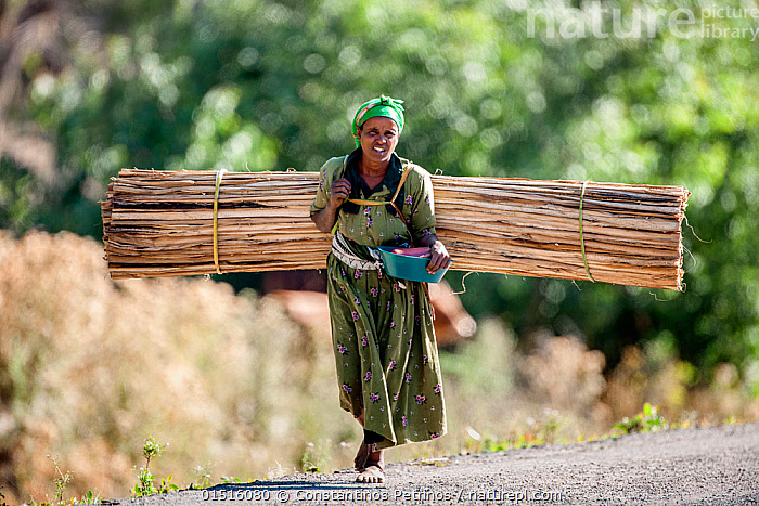 Woman from the Oromo tribe transporting firewood on her back.  Oromia Region, Central Ethiopia, Africa, March 2009.  ,  Carries,Carry,People,African Descent,Female,Woman,Weight,Heavy,Heaviness,Africa,East Africa,Ethiopia,Firewood,Culture,African Culture,African,Indigenous Culture,Transportation,Tribes,Oromo  ,  Constantinos Petrinos
