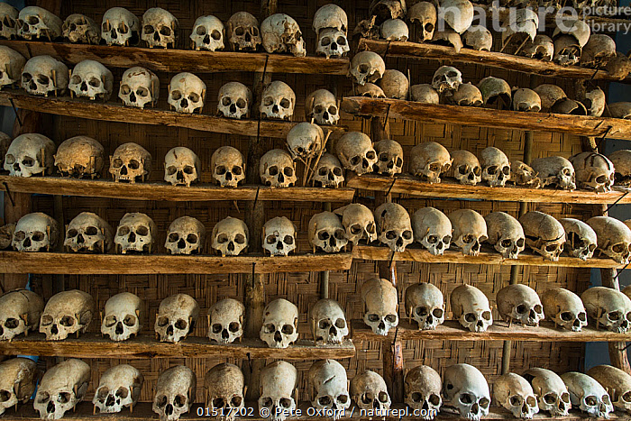 Head-hunted human skulls, collected by the Konyak Naga tribe,  North East India, October 2014.  ,  high15,,,People,Asian Ethnicity,Asian,Asians,Indian Ethnicity,Indian,Mood,Eerie,Order,Ordered,Organized,System,Systematic,Traditional,Group,Large Group,Nobody,Asia,Indian Subcontinent,India,Full Frame,Bone,Bones,Skull,Skulls,Furnishing,Shelf,Shelves,Shelving,Settlement,Village,Villages,Building,Indoors,Backgrounds,Background,Culture,Indigenous Culture,Death,Tribes,Nagaland,Large Group of Objects,Lined up,Collection,Headhunter,Headhunting,Konyak Naga,  ,  Pete Oxford